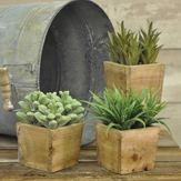 succulents in wood pots